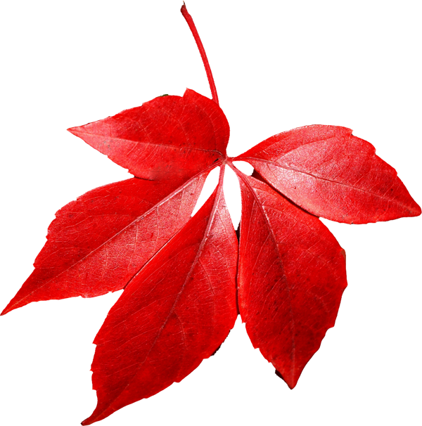 autumn_leaves_PNG3592